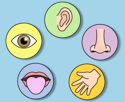 Education World: WebQuest: Five Senses