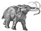 Test Features - Mammoth