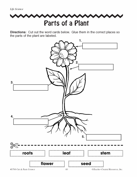 Peaceful image intended for parts of a plant printable