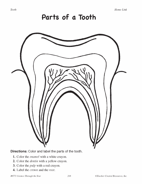 Label Tooth Diagram