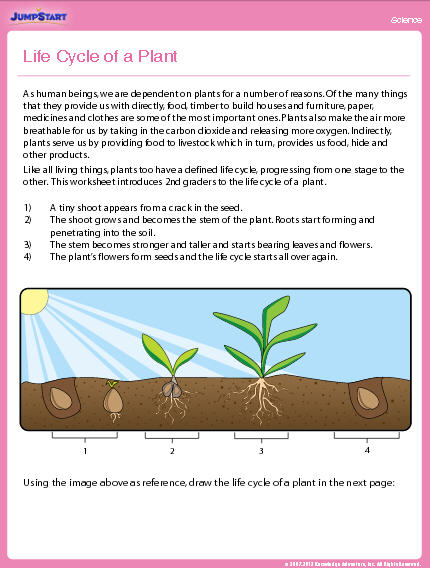 Life Cycle Of A Plant Worksheet Education World