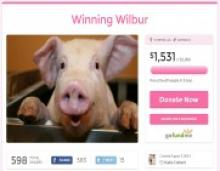 Woman Attempts to Save Pig From School Pork Raffle