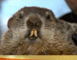 groundhog_sm Teacher Newsletter Templates on free preschool, owl theme, for first grade,